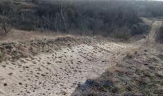 Az erdősített delibláti homokpuszta