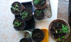 Agócs Enikő ültetett növényei