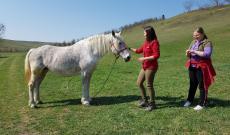 Barátkozás a lóval