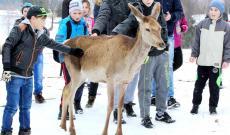 Ivói Vadaspark látogatása, Juliska a szelíd őzike simogatása