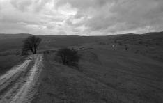 Mezei út Kisgalambfalva határában