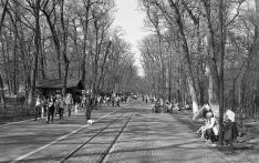 Az állatkert bejáratához vezető promenád Marosvásárhelyen