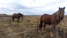 Sztánai lovak