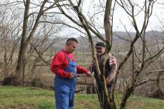 A munka során a fákat is letisztítottuk