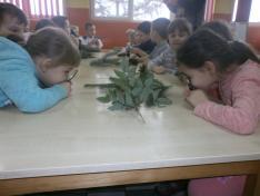 Karácsonyi foglalkozáson fenyőágakat vizsgáltunk
