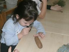 Karácsonyi foglalkozáson fenyőágakat és tobozokat vizsgáltunk