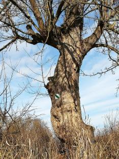A túra jelzése egy ódon fán