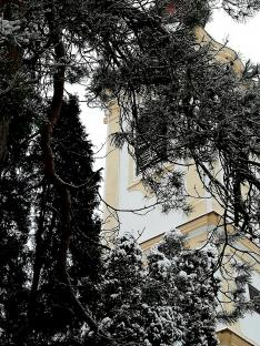 A református templom tornya a fenyők takarásában