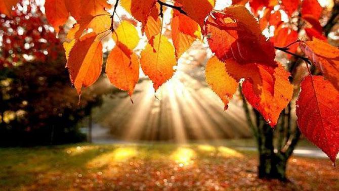 ősz Fogarason
